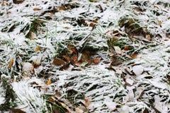 第一个冬天雪分支 库存照片