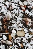第一个冬天雪分支 图库摄影