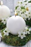 第一个圣餐的新鲜的春天装饰, 免版税库存图片