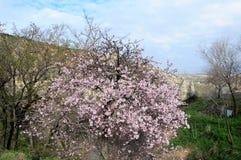 第一个基督徒的住宅岩石的,卡帕多细亚,中央土耳其 免版税库存照片