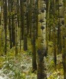 第一个森林雪冬天 免版税库存照片