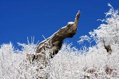 第一个肢体雪冬天 免版税库存照片