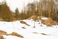 第一个被解冻的补丁,多云天春天在森林,从熔化雪下面您能看到干燥秋天草 库存图片
