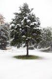 第一个雪冬天 库存图片