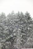 第一个雪冬天 免版税库存图片