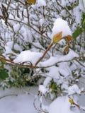 第一个雪冬天 图库摄影