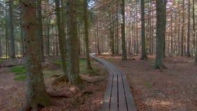 第一人景色赛跑,跑步在小径通过森林 股票视频