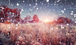 第一冬天降雪在日出的11月冷淡的早晨 在草覆盖的雪花秋天与树冰 免版税图库摄影
