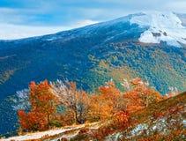 第一冬天雪和秋天五颜六色的叶子在山 库存图片