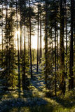 第一冬天霜在绿色森林里(垂直) 免版税库存图片