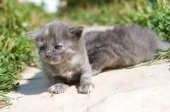 第一只小猫小的结构 免版税图库摄影
