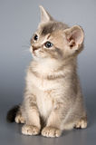 第一只小猫摆在的时间 图库摄影