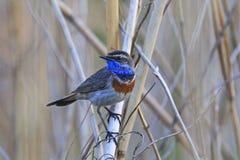 第一只鸟到达了从冬天的那春天 库存照片