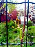 第一在果树离开在庭院 免版税库存图片