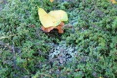 第一天秋天和第一霜 库存图片