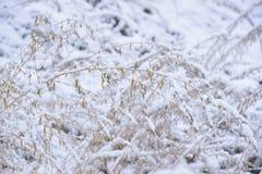 第一日冬天 库存照片