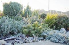 第一早晨霜在庭院里在秋天 库存图片