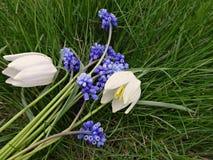 第一春天的花束开花蓝色和白色 免版税库存照片