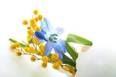 第一朵春天花、蓝色snowdrops和含羞草在蛋壳 复活节假日背景 免版税图库摄影