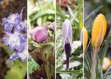第一朵春天花的拼贴画 免版税库存图片