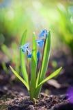 第一朵春天花 免版税库存图片