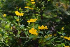 第一朵森林春天花被弄脏的背景 免版税库存照片