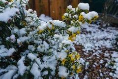 第一朵积雪的花 免版税库存照片