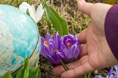 第一朵花在春天 免版税库存图片