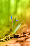 第一朵花 免版税图库摄影
