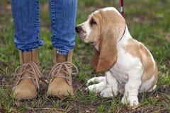 第一次小的小狗在步行的一条皮带 免版税库存照片