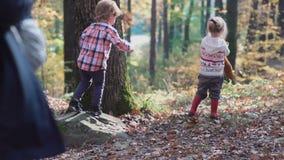 第一爱人 在森林孩子的孩子使用在森林秋天的森林女孩和男孩的 愉快孩子走 影视素材