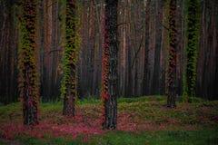 第一片叶子在森林里 免版税库存图片