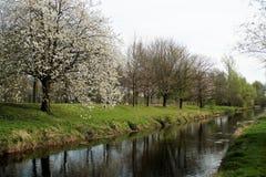 第一片叶子在河niers的春天 免版税库存照片