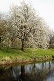 第一片叶子在河niers的春天 免版税库存图片