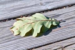 第一片秋天橡木叶子在木板条落 免版税库存图片