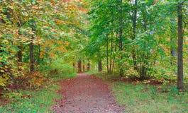 第一片金黄下落的叶子在秋天森林里 免版税库存图片