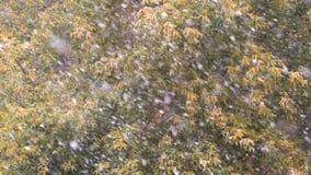 第一秋天降雪 雪在秋天树落 股票视频