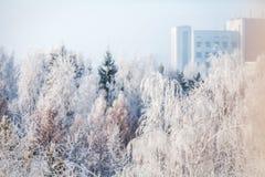 第一雪在公园 33c 1月横向俄国温度ural冬天 库存图片