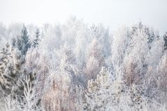 第一雪在公园 33c 1月横向俄国温度ural冬天 免版税库存照片