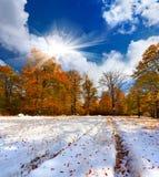 第一雪在山森林里。 免版税库存照片