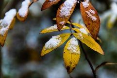 第一雪在早晨森林里 图库摄影