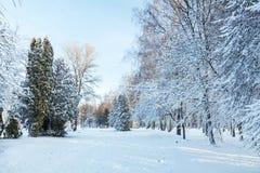 第一雪在有树的城市公园在sunri的新鲜的雪下 图库摄影