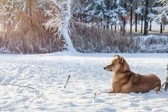 第一雪在有树的城市公园在sunri的新鲜的雪下 免版税库存照片