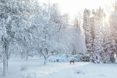 第一雪在有树的城市公园在sunri的新鲜的雪下 库存照片