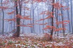 第一雪在有薄雾的秋天森林里 库存照片