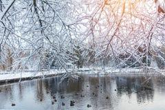 第一雪在有鸭子的城市公园在一个冰冷的池塘和benc 库存图片