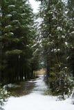 第一雪在森林里 免版税库存照片