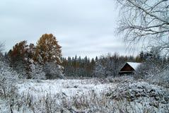 第一雪在森林里 免版税库存图片