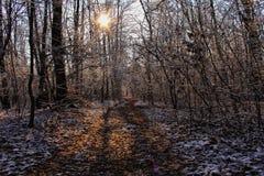 第一雪在森林 免版税库存照片
