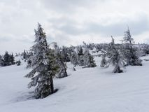 第一雪在波兰 库存图片
